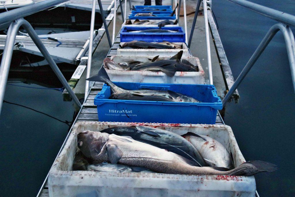 400 kg Fisch