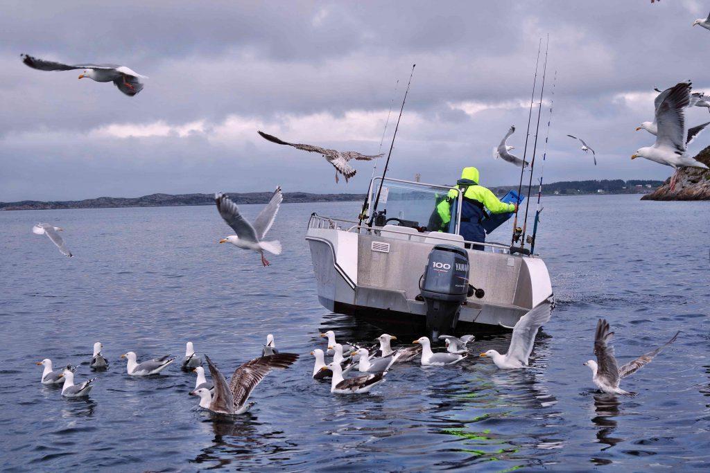 Verklappen der Fischabfälle