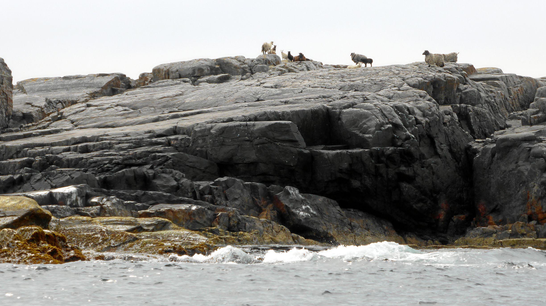 Scharfe auf dem Felsen