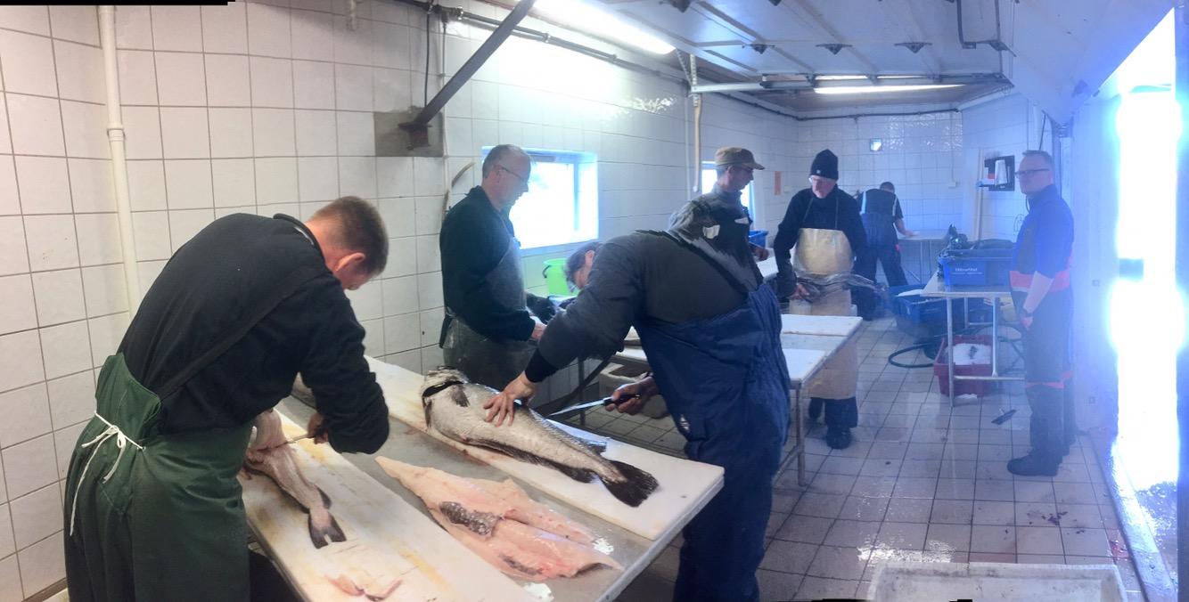 Fischverarbeitung- Gesamtblick